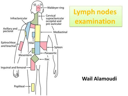 Lymph nodes examination Wail Alamoudi. Head & neck and clavicle UL (axillary, epitrochlear) LL (inguinal, femoral and popliteal) Abdomen ( paraaortic,