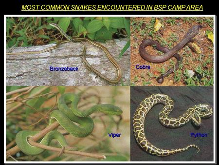 Venomous Snakes of Florida  SNAKES!!!!!!! Introduction Most snake