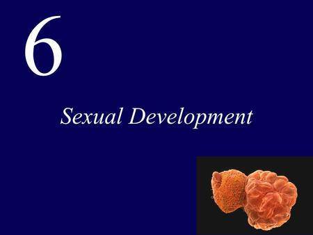 6 Sexual Development.