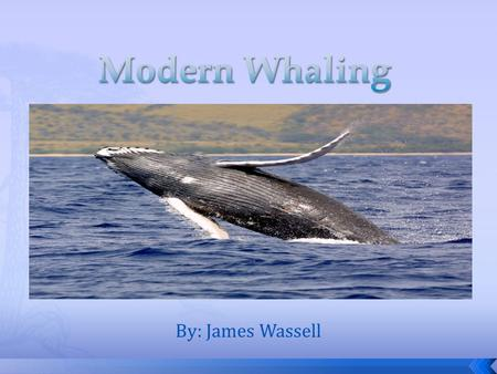 By: James Wassell. Whaling is the hunting of whales and started in the year 4,000 BC. o Traditional Arctic whaling developed rapidity with early organized.