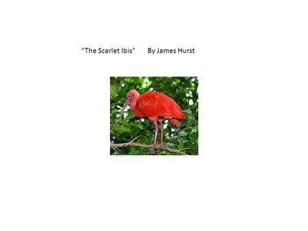 Thesis Statement Essay The Scarlet Ibis By James Hurst  High School Vs College Essay Compare And Contrast also High School Application Essay Examples The Scarlet Ibis By James Hurst  Ppt Video Online Download Essay My Family English