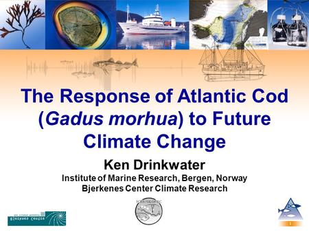The Response of Atlantic Cod (Gadus morhua) to Future Climate Change