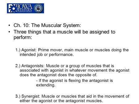 Ch. 10: The Muscular System: