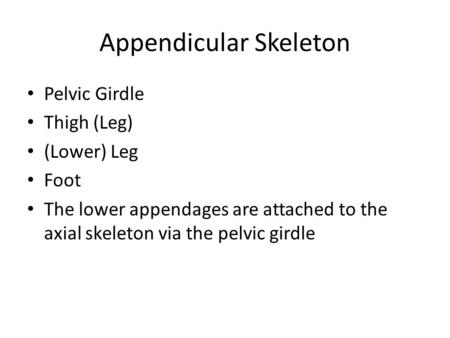 Appendicular Skeleton Pelvic Girdle Thigh (Leg) (Lower) Leg Foot The lower appendages are attached to the axial skeleton via the pelvic girdle.