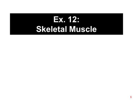 Ex. 12: Skeletal Muscle.