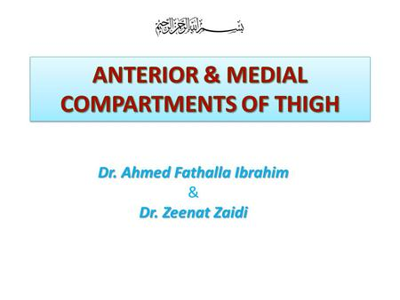 ANTERIOR & MEDIAL COMPARTMENTS OF THIGH