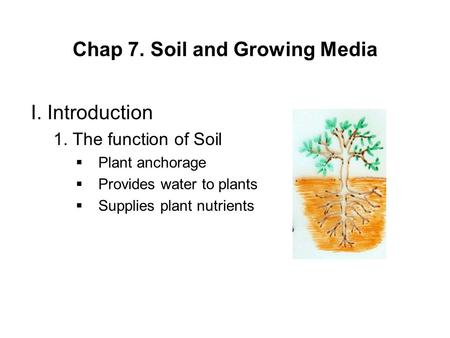 Chap 7. Soil and Growing Media I. Introduction 1. The function of Soil  Plant anchorage  Provides water to plants  Supplies plant nutrients.
