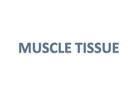MUSCLE TISSUE.