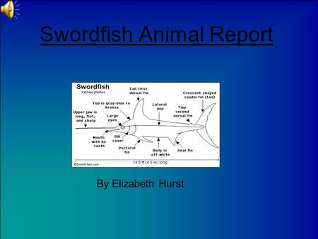 Swordfish Animal Report By Elizabeth Hurst Introduction Have you ever heard of a swordfish? Did you ever want to learn about them? Swordfish are awesome.