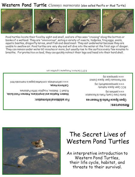 The Secret Lives of Western Pond Turtles An interpretive introduction to Western Pond Turtles, their life cycle, habitat, and threats to their survival.