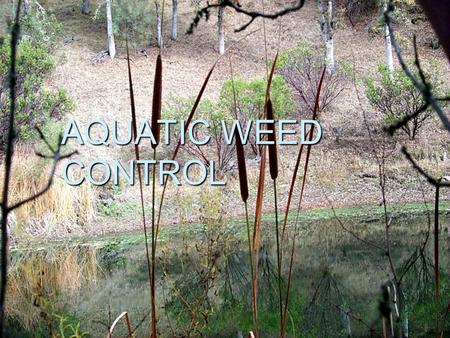 AQUATIC WEED CONTROL. Ponds  14,000 ponds east of highway 17.
