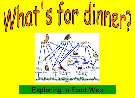 What's for dinner? Exploring a Food Web.
