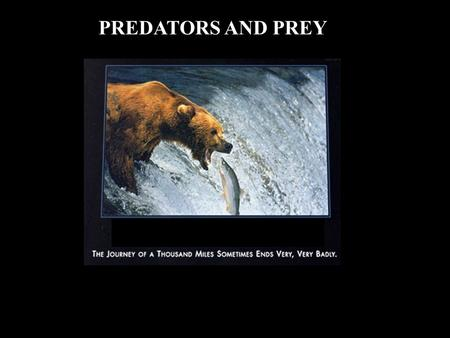 PREDATORS AND PREY. LOOK AT THREE ASPECTS: 1. Decisions made by animals in collecting food 2. Behaviour involved in collecting food 3. Ways to avoid being.