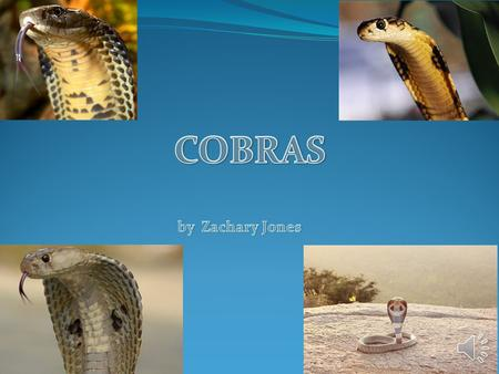 COBRAS by Zachary Jones.