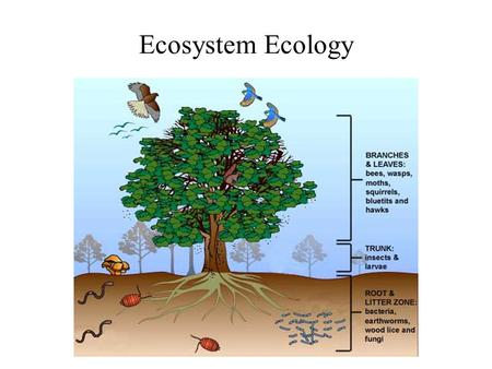 Ecosystem Ecology. Basic ecosystem - nutrient cycling in red, energy flow in grey.