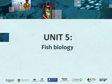 UNIT 5: Fish biology.
