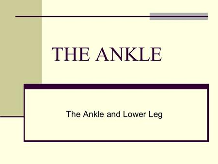 THE ANKLE The Ankle and Lower Leg.