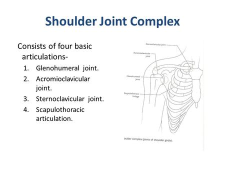 Shoulder Joint. - ppt video online download