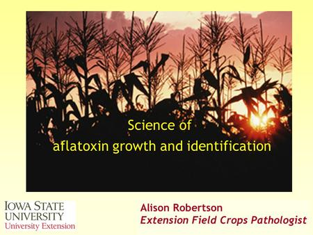 A. Robertson, 2006 © Science of aflatoxin growth and identification Alison Robertson Extension Field Crops Pathologist.