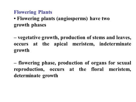 Flowering Plants Flowering plants (angiosperms) have two growth phases – vegetative growth, production of stems and leaves, occurs at the apical meristem,