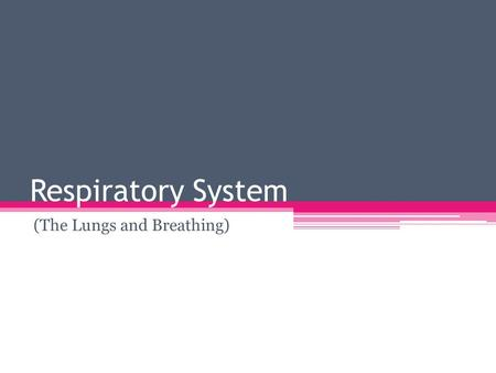 Respiratory System (The Lungs and Breathing). Before ExerciseAfter intense exercise Breathing is regular Breaths have less volume Enough oxygen is being.