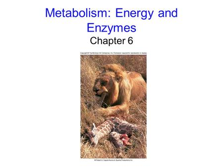 Metabolism: Energy and Enzymes Chapter 6. 2 Flow of Energy Energy: the capacity to do work -kinetic energy: the energy of motion -potential energy: stored.