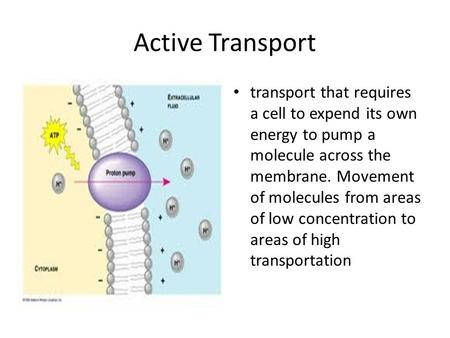 Active Transport transport that requires a cell to expend its own energy to pump a molecule across the membrane. Movement of molecules from areas of low.