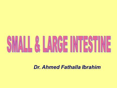 SMALL & LARGE INTESTINE