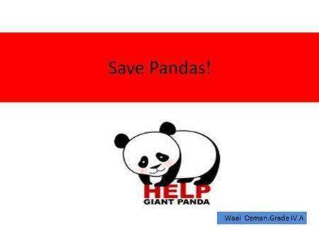 !Save Pandas Wael Osman.Grade IV A. Panda's Features They have: - a large head -small shaped pupils -sensitive nose and ears -strong teeth for chewing.