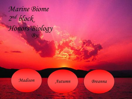 Marine Biome 2 nd block Honors Biology By: Madison AutumnBreanna.