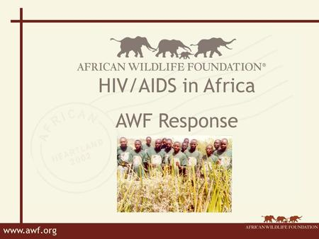 Www.awf.org HIV/AIDS in Africa AWF Response. www.awf.org AWF's Response Leadership Workplace Policy Employee benefits Awareness and education Links with.