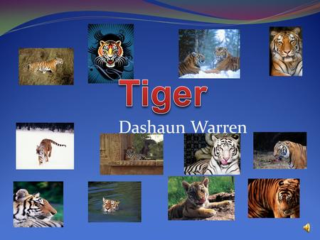 Tiger Dashaun Warren B.