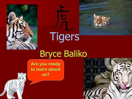 Tigers Bryce Baliko Are you ready to learn about us?