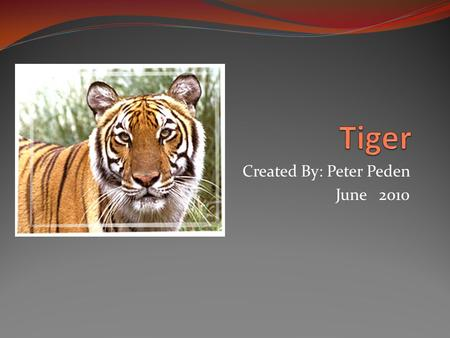 Created By: Peter Peden June 2010. Something Bigger Than Your House Cat You were walking in Asia when you hear a roar. It was a tiger.