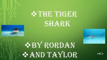  The Tiger shark  By rordan  and Taylor The Tiger Shark has tiger-like markings on a dark back with an off-white underbelly.  On average the Tiger.