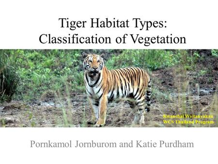 Tiger Habitat Types: Classification of Vegetation Pornkamol Jornburom and Katie Purdham Kwanchai Waitanyakan WCS Thailand Program.
