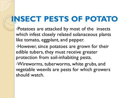 INSECT PESTS OF POTATO Potatoes are attacked by most of the insects which infest closely related solanaceous plants like tomato, eggplant, and pepper.