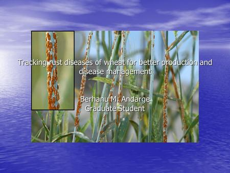 Tracking rust diseases of wheat for better production and disease management Berhanu M. Andarge Graduate Student.