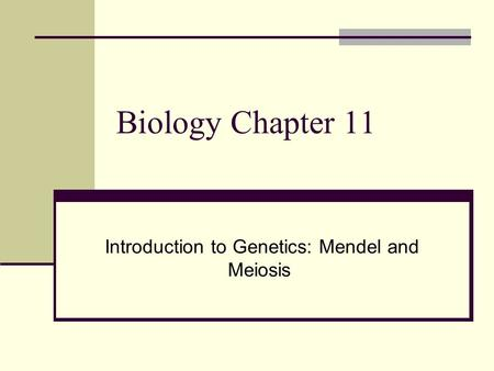 Introduction to Genetics: Mendel <strong>and</strong> Meiosis