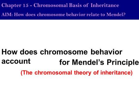 How does <strong>chromosome</strong> behavior account Chapter 15 - <strong>Chromosomal</strong> Basis of Inheritance AIM: How does <strong>chromosome</strong> behavior relate to Mendel? for Mendel's Principles.