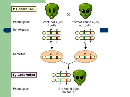The following is a map of four genes on a chromosome: