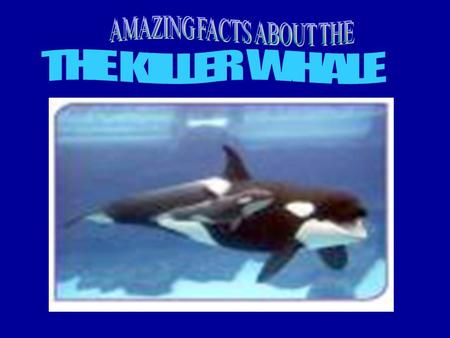 Contents Features Hunting Swimming Food Where Orcas Live The Orca Family How the killer whale survives Babies.