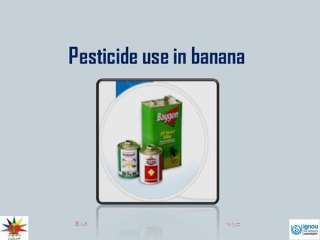 Pesticide use in banana End Next. Banana are susceptible to damage to damage by insects, the leaves are attacked by fugal diseases and roots are damaged.