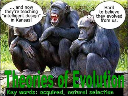 Theories of Evolution Key words: acquired, natural selection.