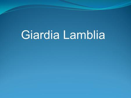 Giardia Lamblia. Giardia Giardia lamblia is a flagellated protozoan that infects the duodenum and small intestine. range from asymptomatic colonization.