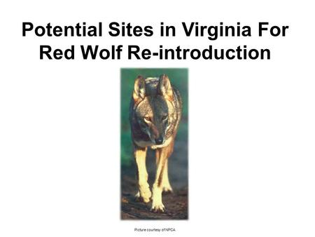 Potential Sites in Virginia For Red Wolf Re-introduction Picture courtesy of NPCA.
