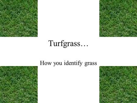 Turfgrass… How you identify grass. Identifying North Carolina lawn grass varieties. There are three regions or zones based on climate –Temperature –Available.