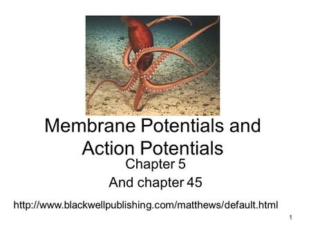 Membrane Potentials and Action Potentials