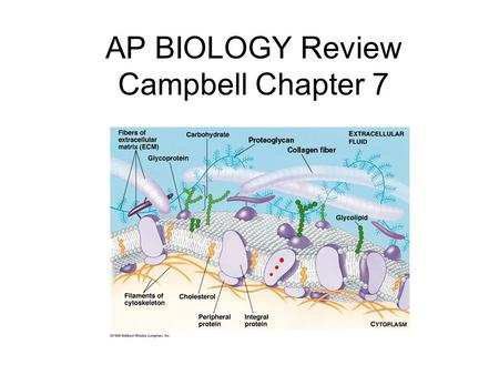 AP BIOLOGY Review Campbell Chapter 7