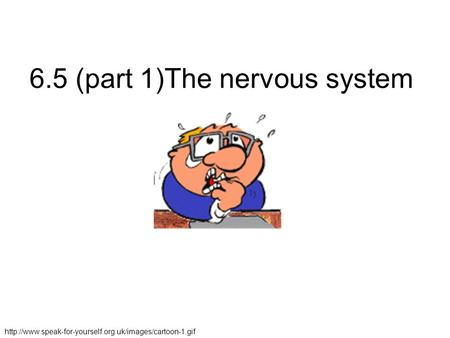 6.5 (part 1)The nervous system